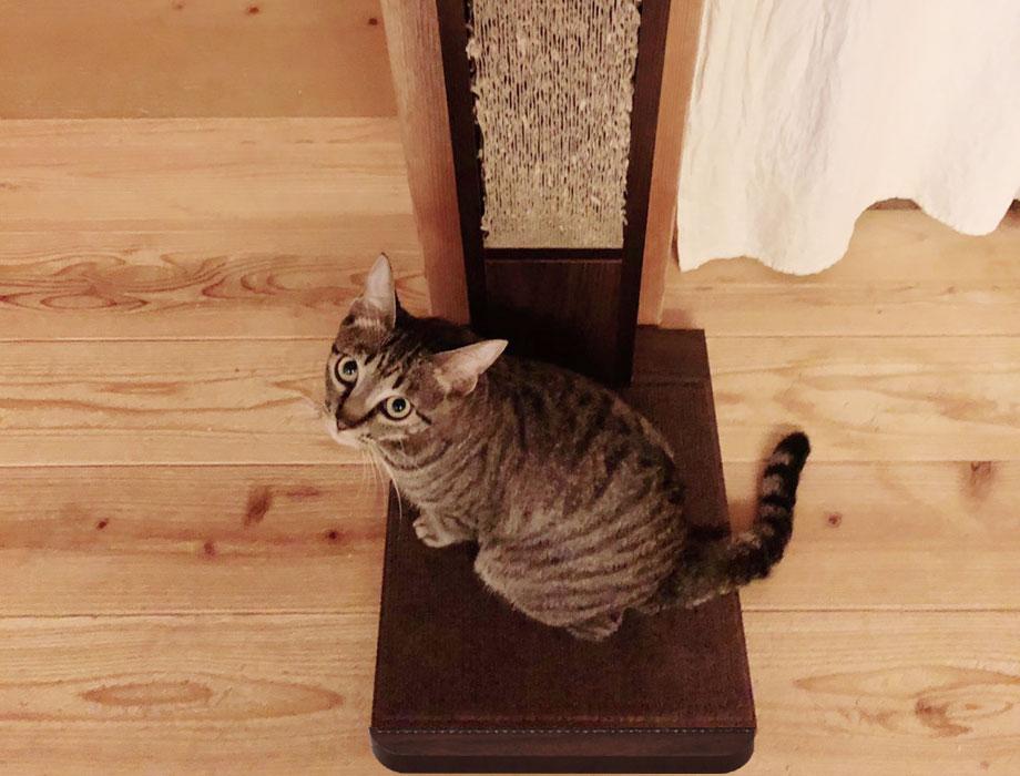 (ココデネ!)猫の爪とぎタワーイメージイメージ4